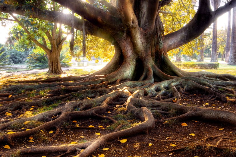 Grounded roots tree